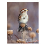 American Tree Sparrow Postcards
