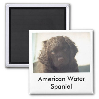 American Water Spaniel Puppy Magnet