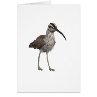 American Whimbrel Greeting Cards