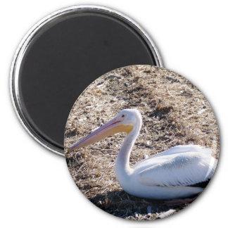 American White Pelican 6 Cm Round Magnet