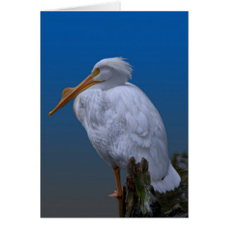 American White Pelican at the Water Greeting Card