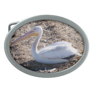 American White Pelican Belt Buckles