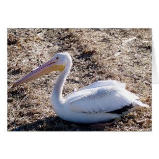 American White Pelican Greeting Card