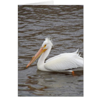 American White Pelican In Breeding Condition Greeting Card