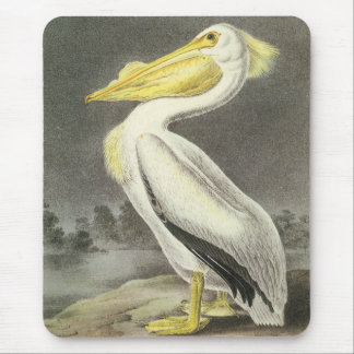 American White Pelican John Audubon Mouse Pad