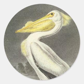 American White Pelican, John Audubon Round Stickers