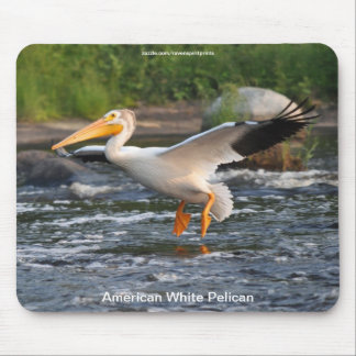 American White Pelican Landing on River Rapids Mouse Pad