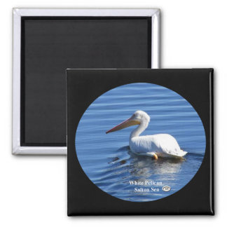 American White Pelican Magnet