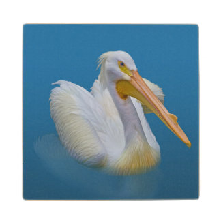 American White Pelican Maple Wood Coaster