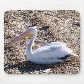 American White Pelican Mousepad