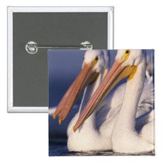 American White Pelican, Pelecanus Buttons