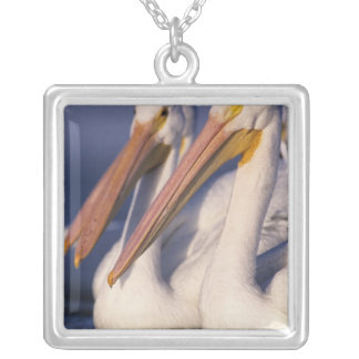 American White Pelican, Pelecanus Pendants