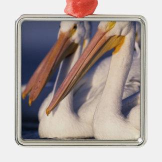 American White Pelican, Pelecanus Silver-Colored Square Decoration