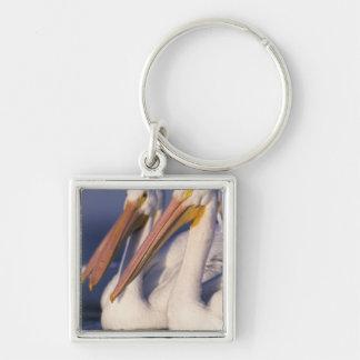 American White Pelican, Pelecanus Silver-Colored Square Key Ring