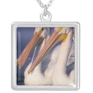 American White Pelican, Pelecanus Square Pendant Necklace