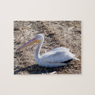 American White Pelican Puzzles