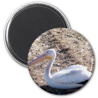 American White Pelican Refrigerator Magnets