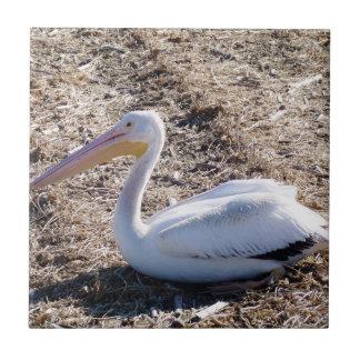 American White Pelican Ceramic Tile