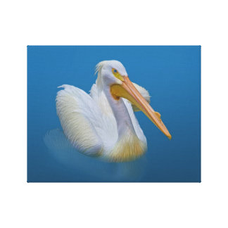 American White Pelican Wrapped Canvas Print