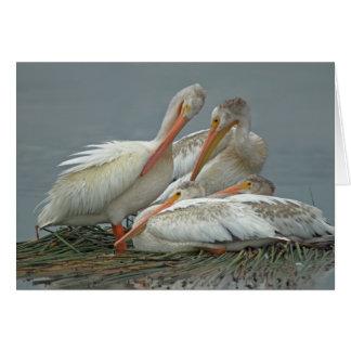 American White Pelicans -Pelecanus erythrorhynchos Card