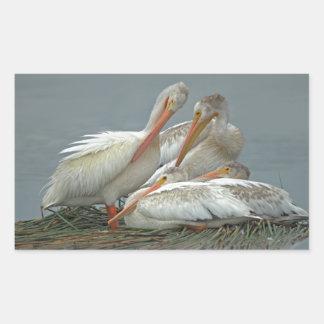 American White Pelicans -Pelecanus erythrorhynchos Rectangular Sticker