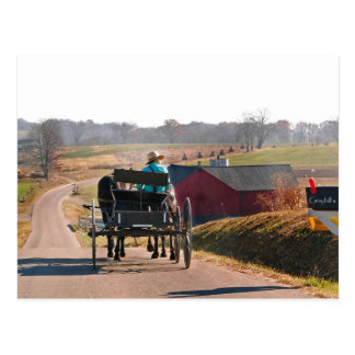 Amish Boy Drives Open Buggy Postcard