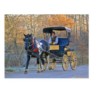 Amish Boy Drives Wedding Carriage Postcard