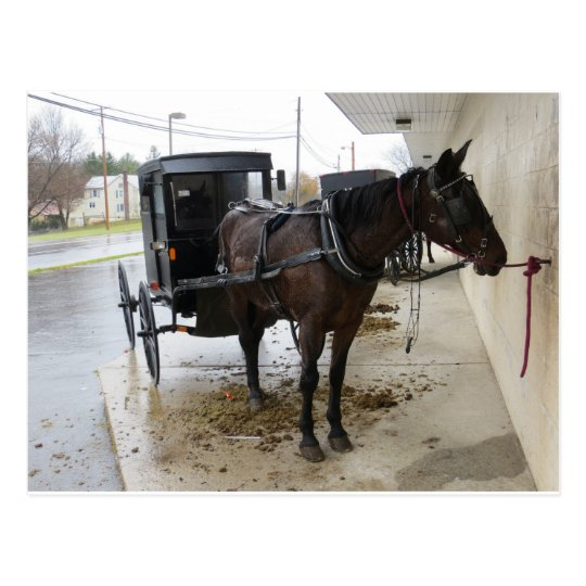Amish Buggy 2 Postcard