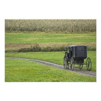 Amish buggy on farm lane, Northeastern Ohio, Photo Art