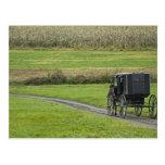 Amish buggy on farm lane, Northeastern Ohio, Postcard