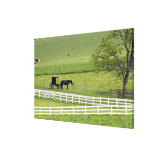 Amish farm with horse and buggy near Berlin, Canvas Print
