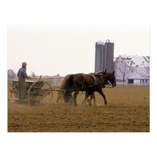 Amish farmer using a horse drawn seed planter postcard