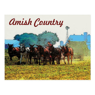 Amish Farming Postcard