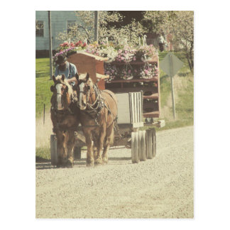 Amish Flower Delivery Postcard