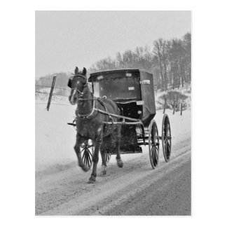 Amish Horse and Buggy 3-Postcard Postcard
