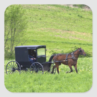 Amish horse and buggy near Berlin, Ohio. Square Sticker