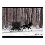 Amish Horse and  Buggy Postcard