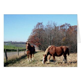 Amish Horses Card