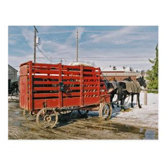 Amish Livestock Wagon-Postcard Postcard