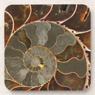 Ammonite Coaster