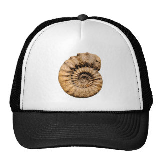 Ammonite Fossil Mesh Hats