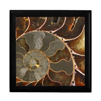 Ammonite Gift Box