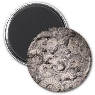 Ammonite magnet
