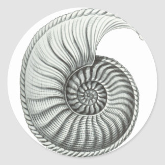 Ammonite Round Sticker