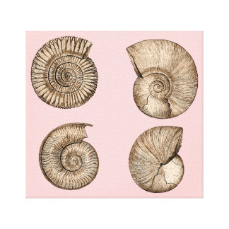Ammonites Stretched Canvas Prints