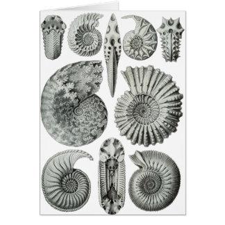 Ammonites Greeting Card