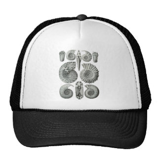 Ammonites Mesh Hats