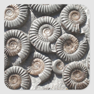 Ammonites On Rock Photo Square Sticker