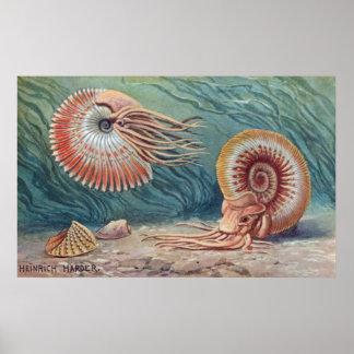 Ammonites Print