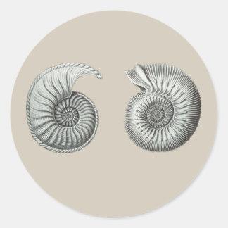 Ammonites Classic Round Sticker